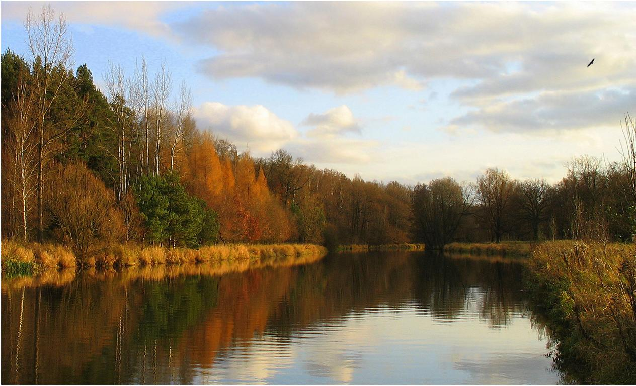 Поздняя Осень. Автор фото: Валерий Афанасьев