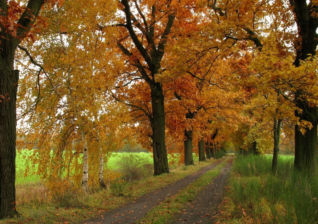 Золотая осень. Автор фото: Валерий Афанасьев