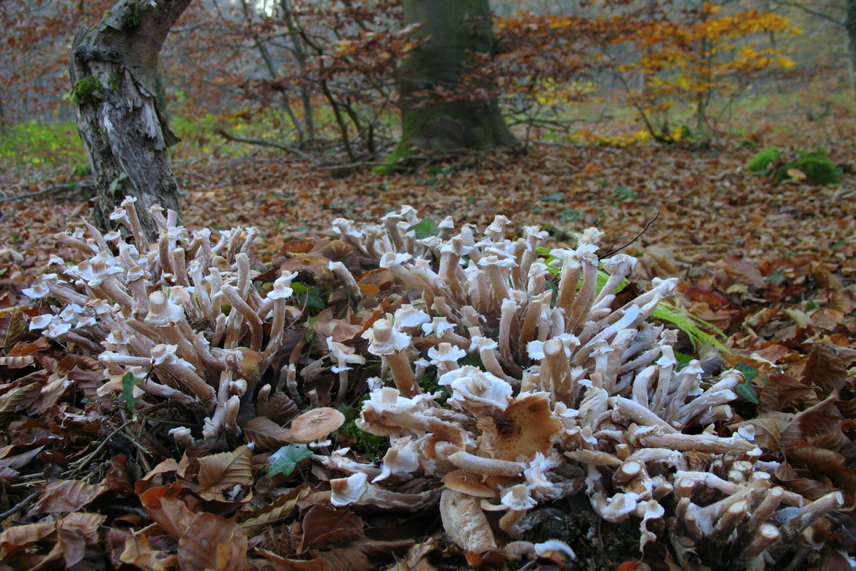 Апофеоз грибного сезона. Автор фото: Валерий Афанасьев