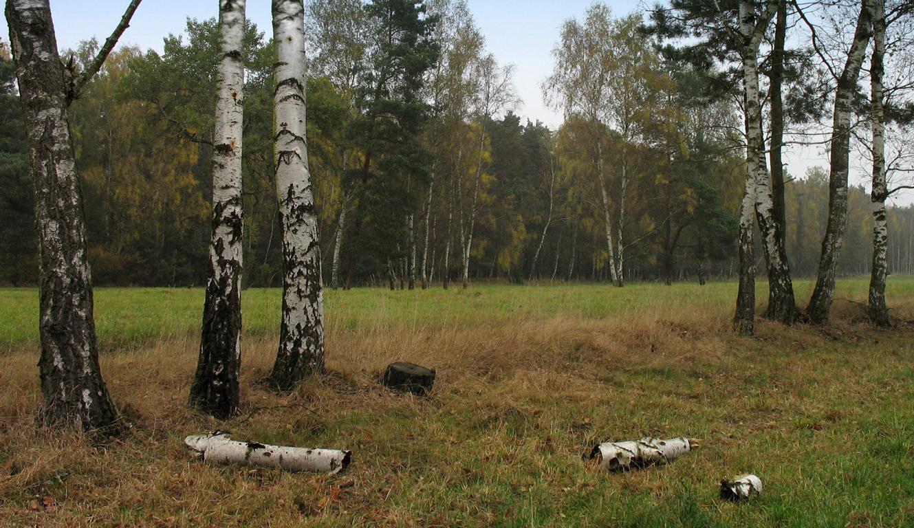 Вот и Осень.. Автор фото: Валерий Афанасьев