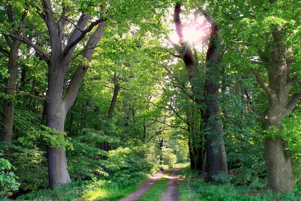 Дубовый лес. Автор фото: Валерий Афанасьев