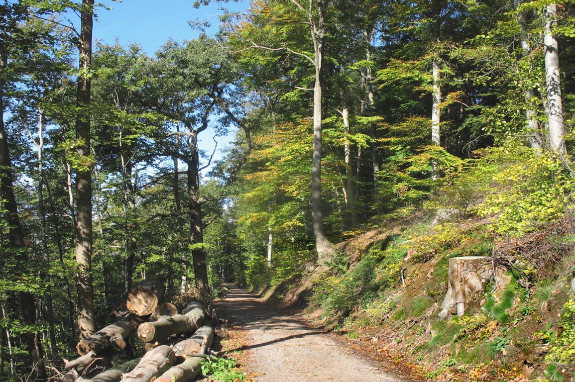 Лес на склоне горы. Октябрь.. Автор фото: Валерий Афанасьев