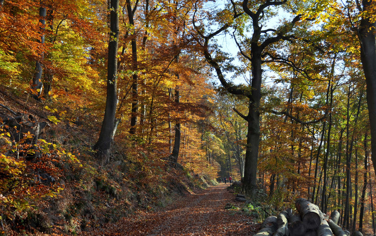 Лес в горах. Автор фото: Валерий Афанасьев
