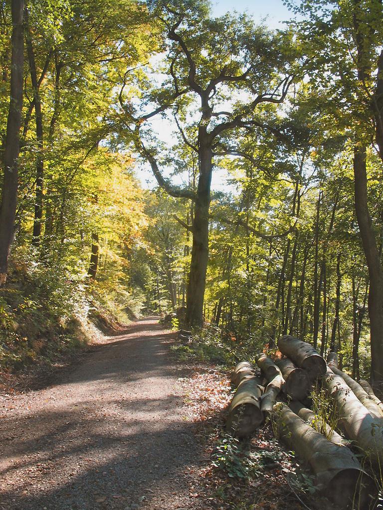 Дорога в горном лесу. Автор фото: Валерий Афанасьев