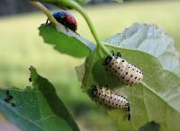 Насекомые и личинки