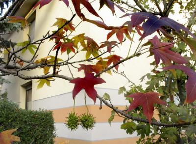 Конец ноября. Остатки роскоши осенней. Автор фото: Валерий Афанасьев