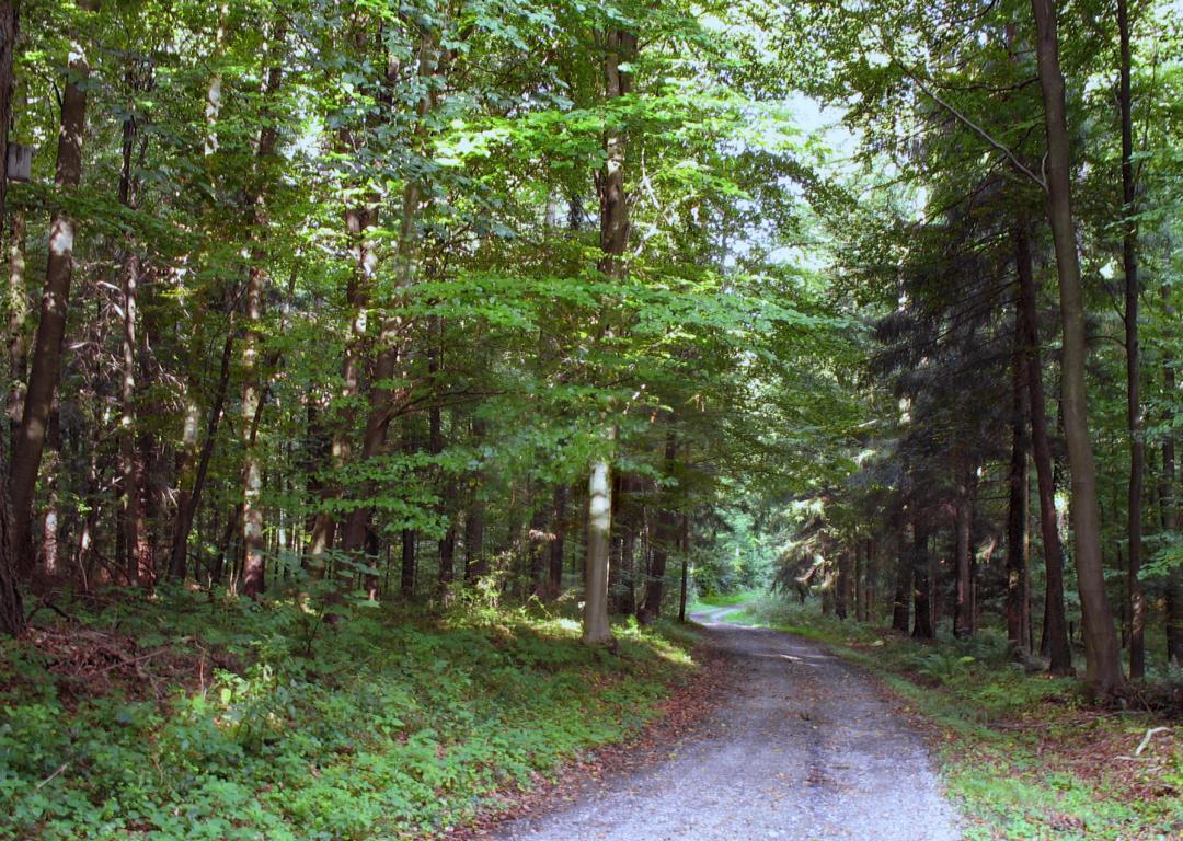Лес в сентябре. Автор фото: Валерий Афанасьев