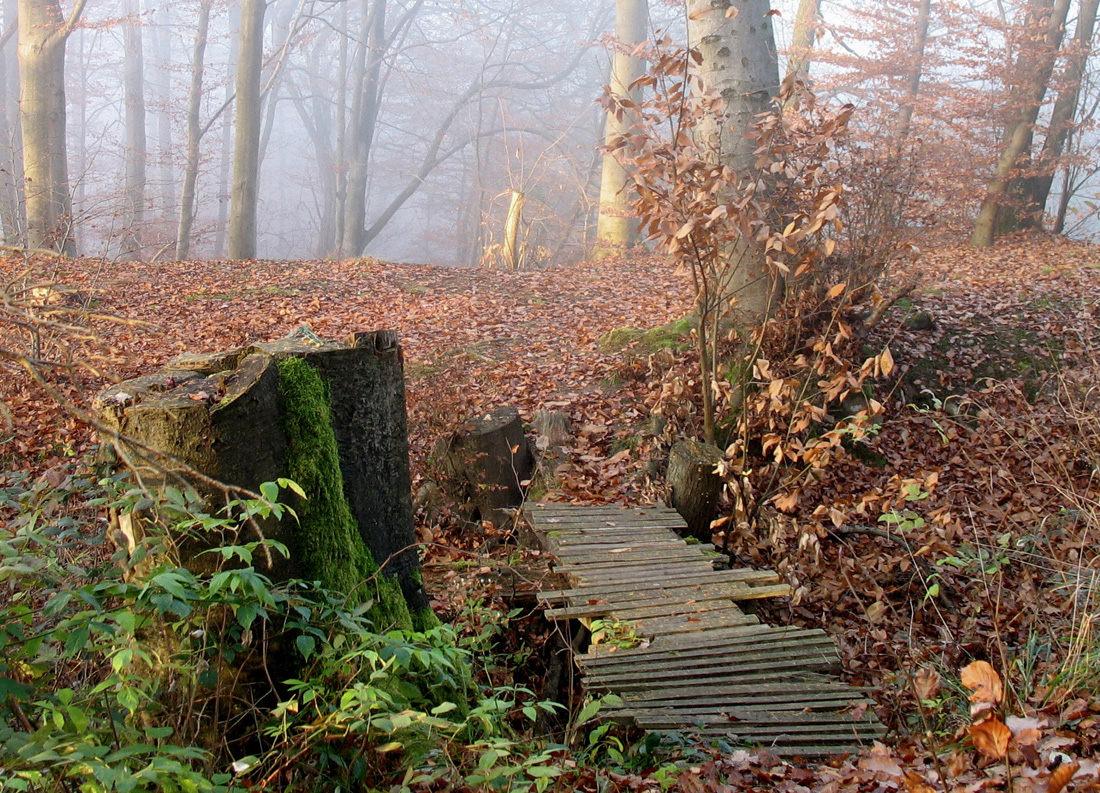 Мостик в лесу. Автор фото: Валерий Афанасьев