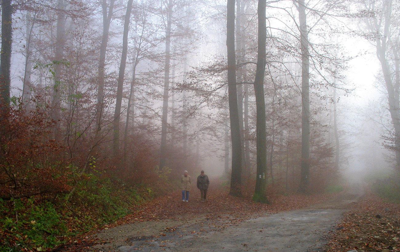 Туманы осенние. Автор фото: Валерий Афанасьев
