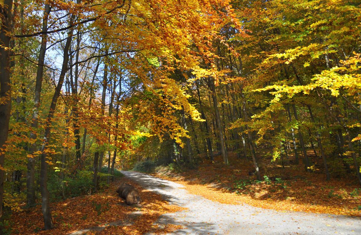 Осенние буки. Автор фото: Валерий Афанасьев