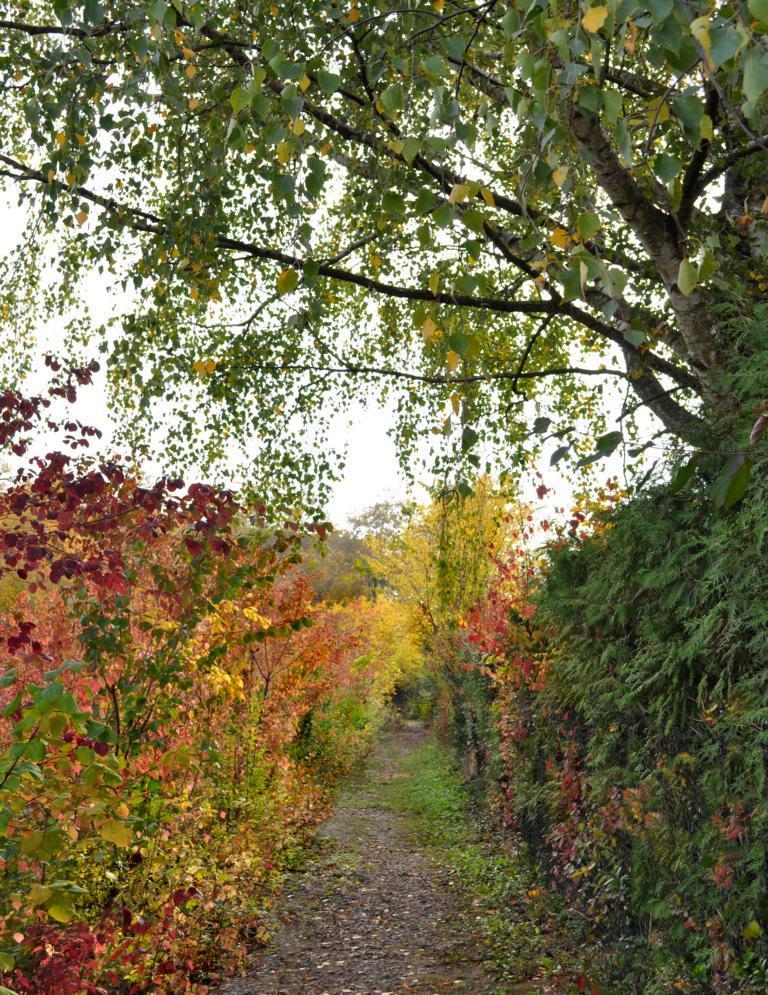 Осенняя тропинка. Автор фото: Валерий Афанасьев