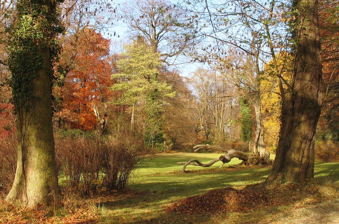 Осень в парке. Автор фото: Валерий Афанасьев
