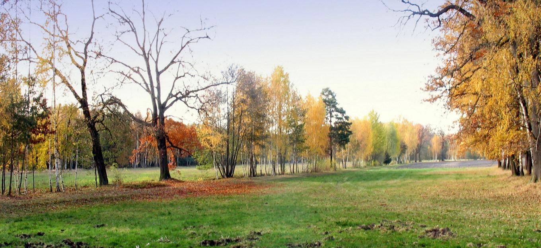 Осенний мотив. Автор фото: Валерий Афанасьев