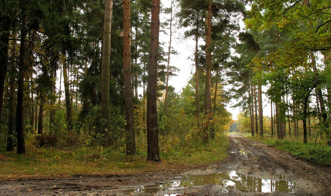 После дождя. Автор фото: Валерий Афанасьев