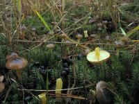 Дикие косули и грибы.