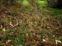 Дикие кабаны и грибы