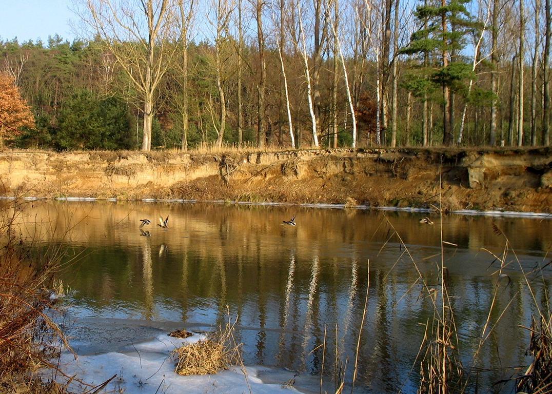 Утки на речке. Автор фото: Валерий Афанасьев