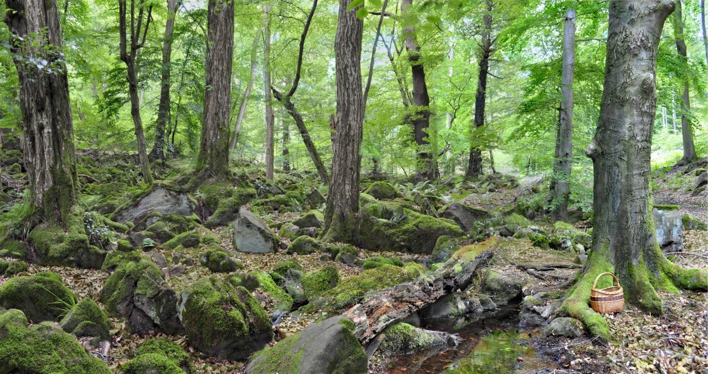 Колдовской лес. Автор фото: Валерий Афанасьев
