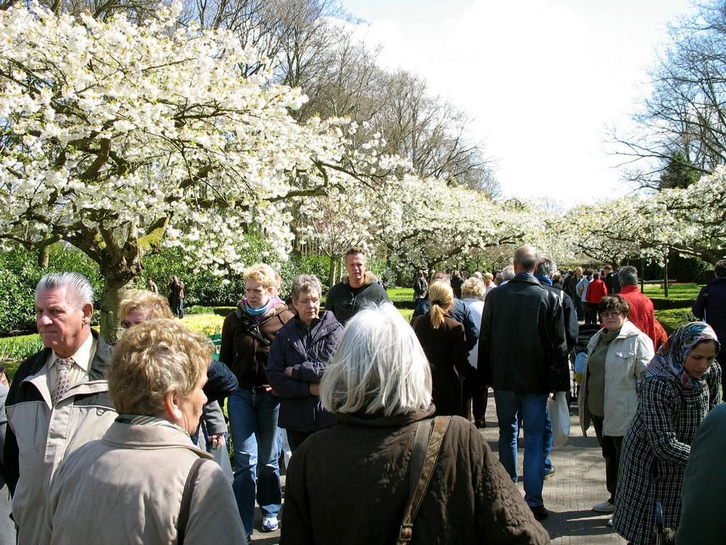 Парк цветов, Нидерланды. Автор фото: Валерий Афанасьев