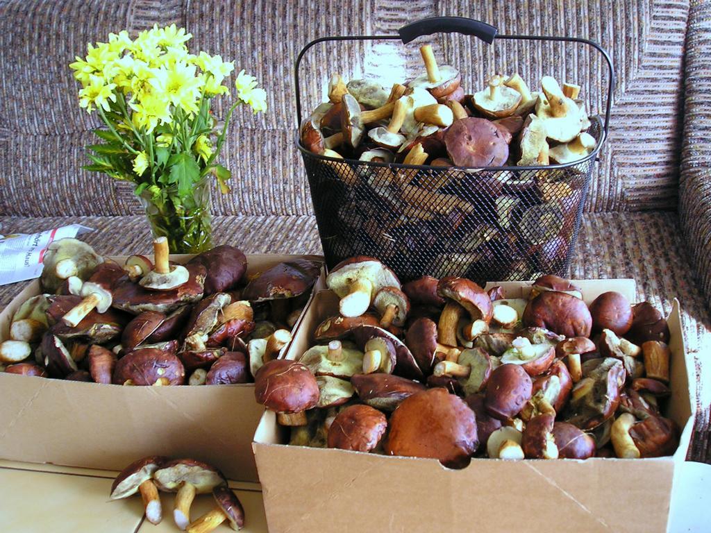 Корзина с грибами Boletus badius. Автор фото: Валерий Афанасьев