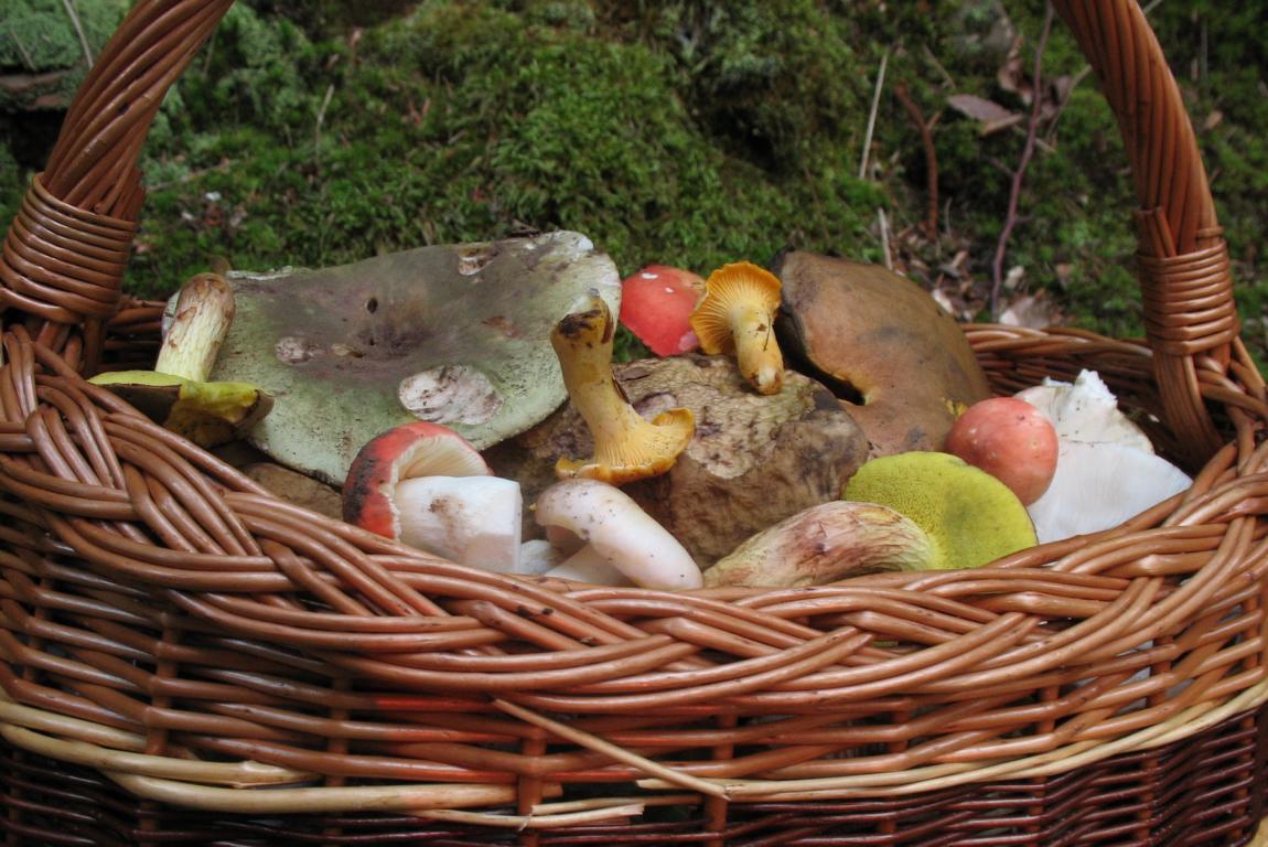 Корзина с грибами. Автор фото: Валерий Афанасьев