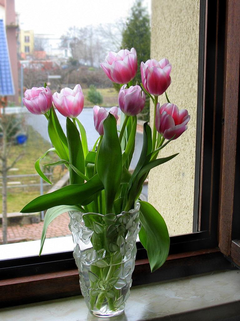Ваза с Тюльпанами. Автор фото: Валерий Афанасьев