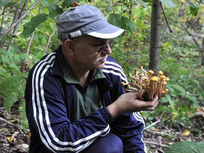 Опенок настоящий (Armillaria mellea) Автор: Юрий Чуднов