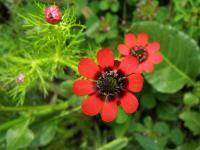 s:травянистые,c:красные,d:в Израиле