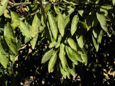 На листьях Миндаля. Автор фото: Александр Гибхин