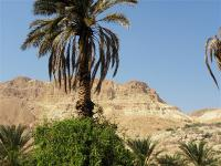 Возле Мёртвого моря