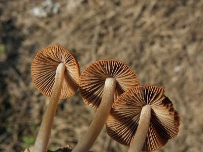 Грибы были найдены на цитрусовой плантации в ноябре, рядом с городом Ашдод. Автор фото: Александр Гибхин