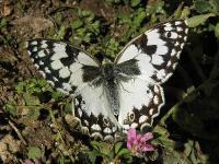 s:дневные бабочки,c:белые,s:бабочки