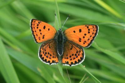 Бабочки найдены рядом с речкой Лахиш рядом с городом Ашдод. Автор фото: Александр Гибхин