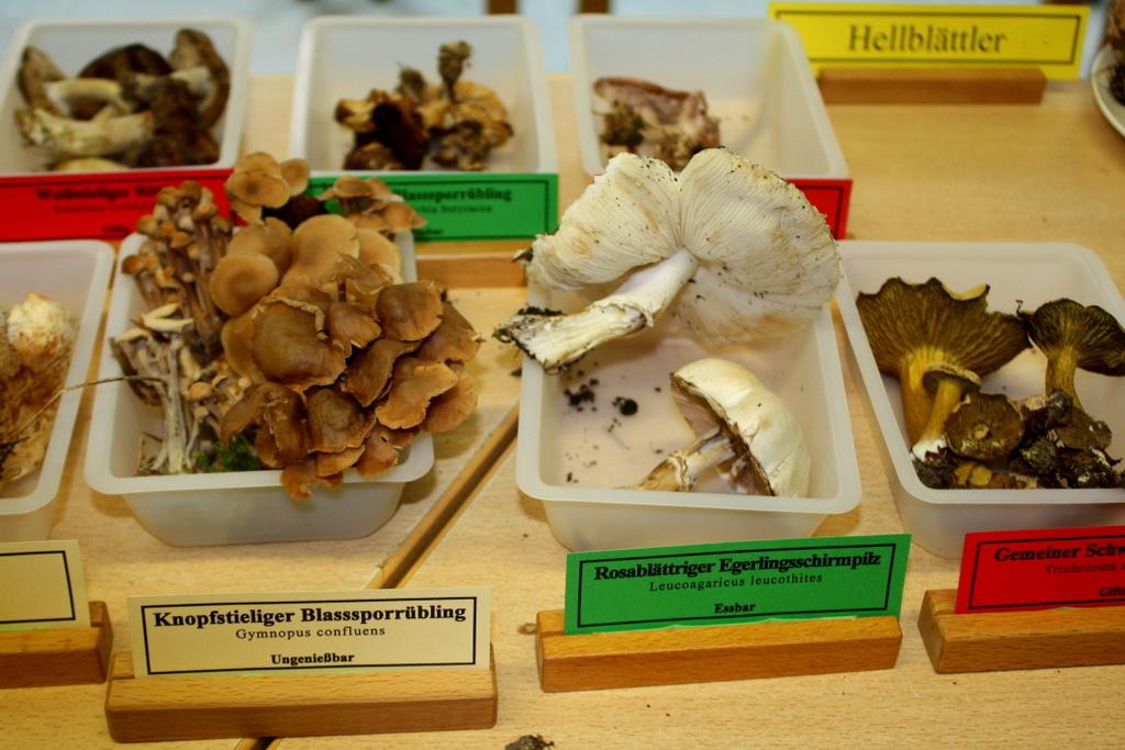 Выставка любителей грибов. Автор фото: Йохан Метте