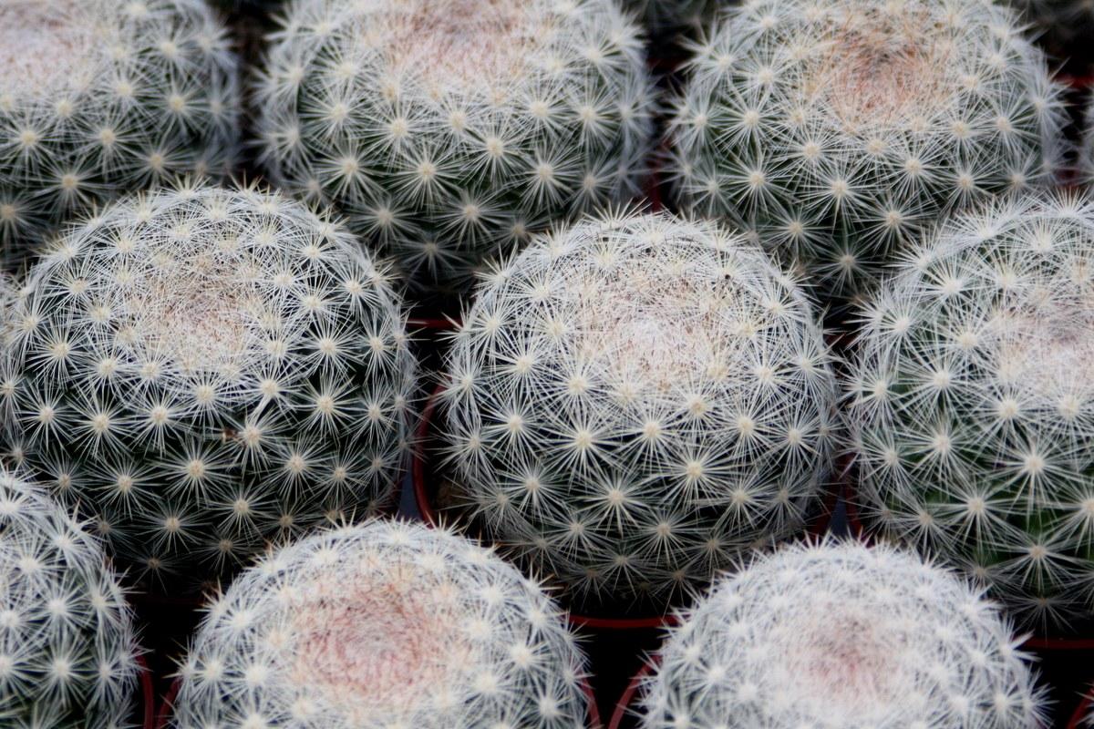 Кактусы. Автор фото: Йохан Метте