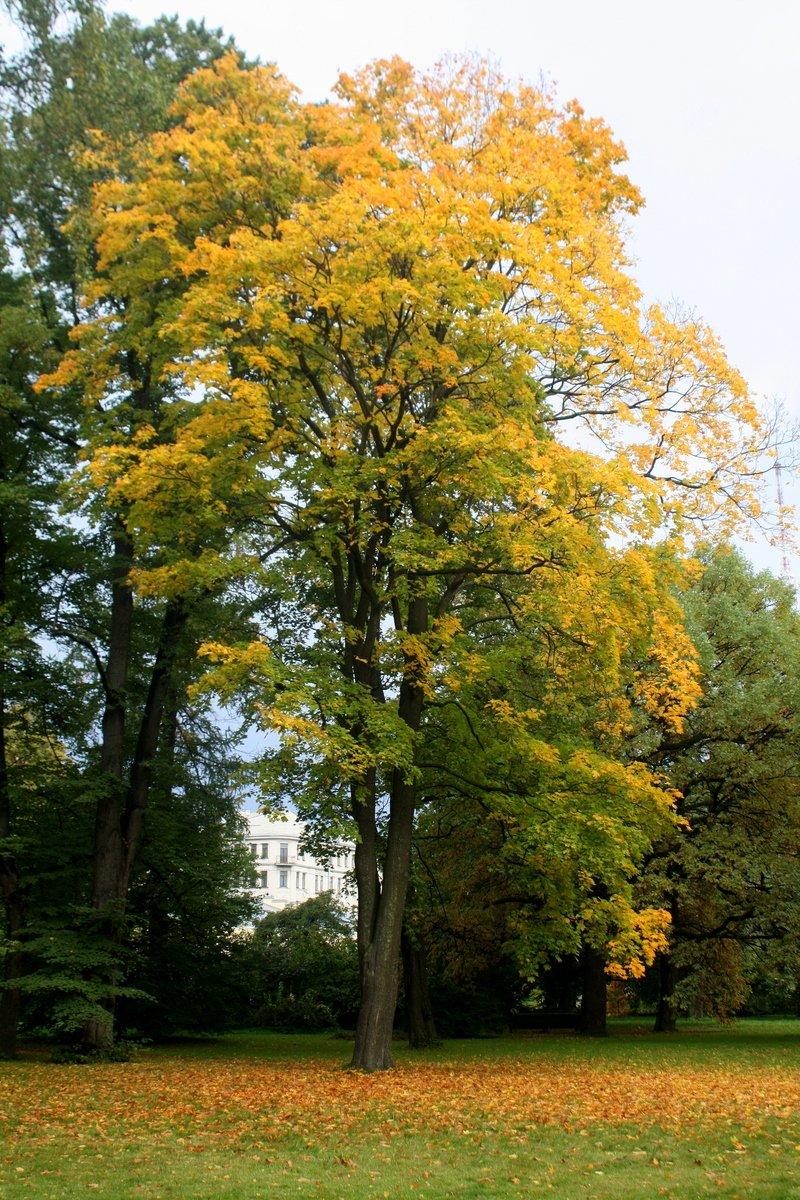 Осень в Бoтаническoм саду г. Санкт-Петербург. Автор фото: Йохан Метте