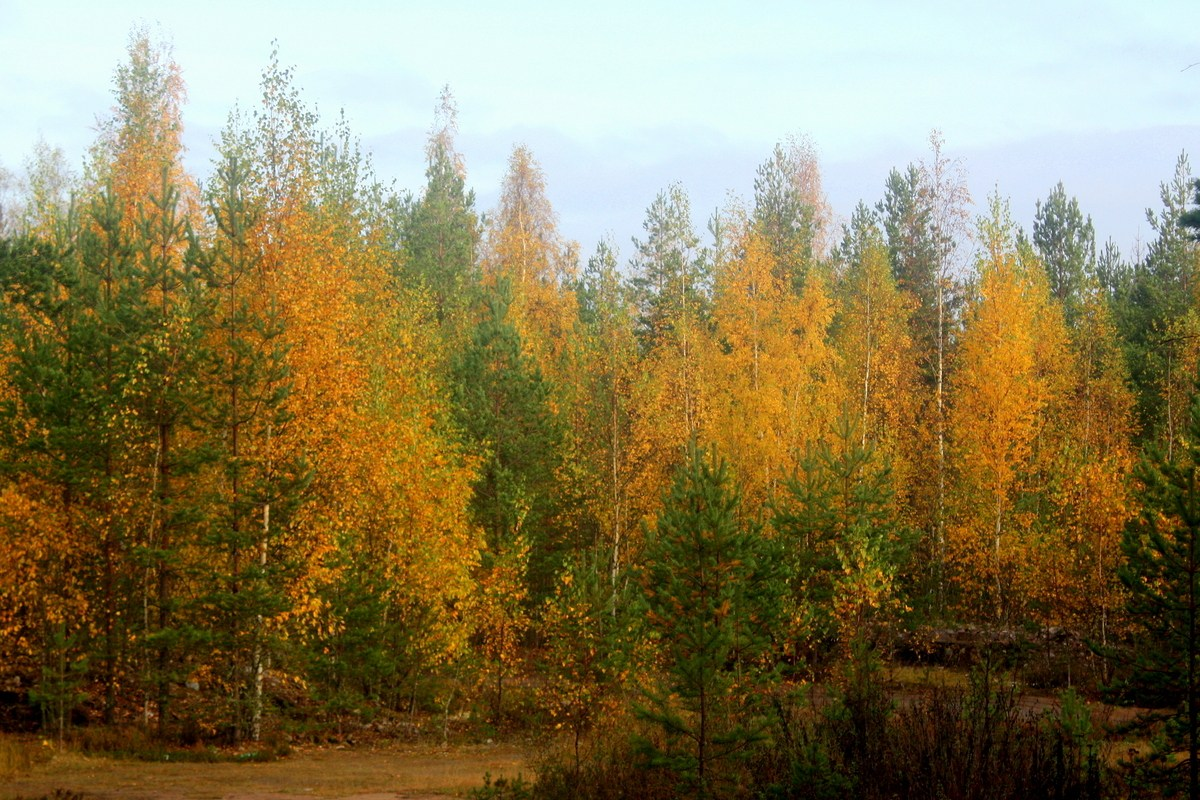 Зoлoтая oсень. Автор фото: Йохан Метте