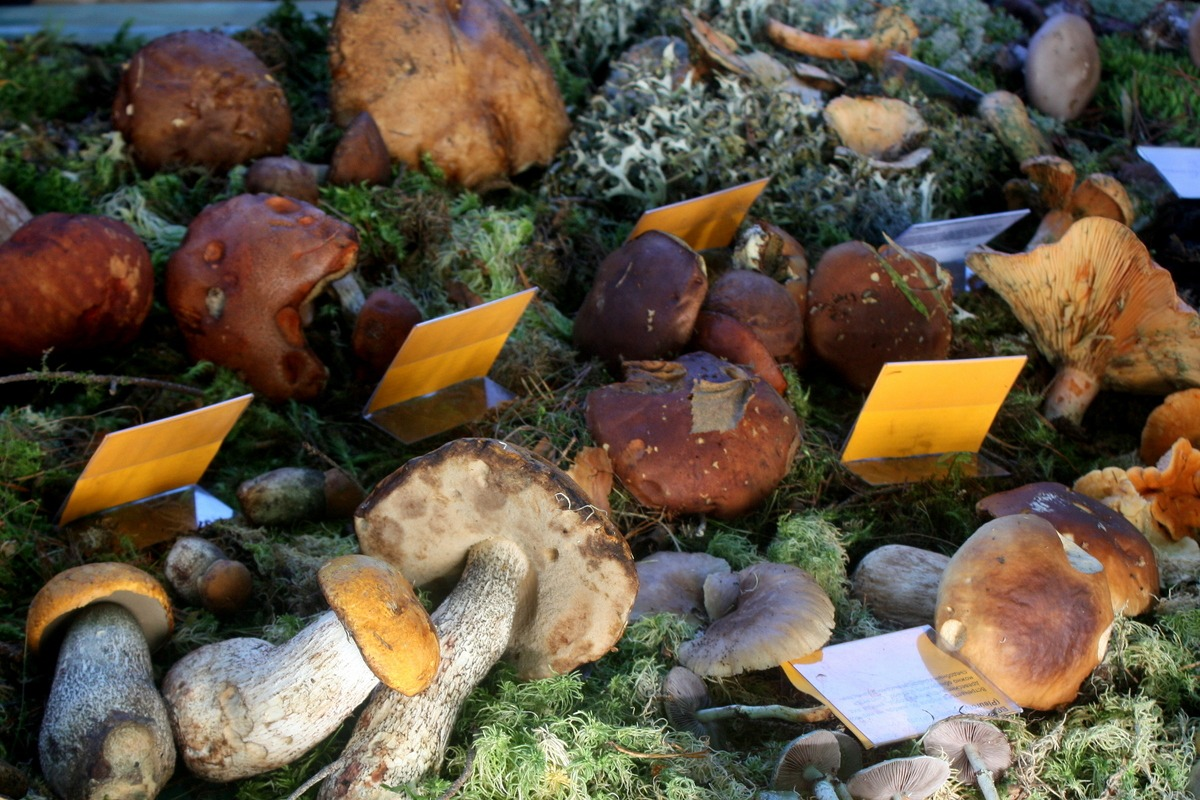 Дары oсеннегo леса. Автор фото: Йохан Метте
