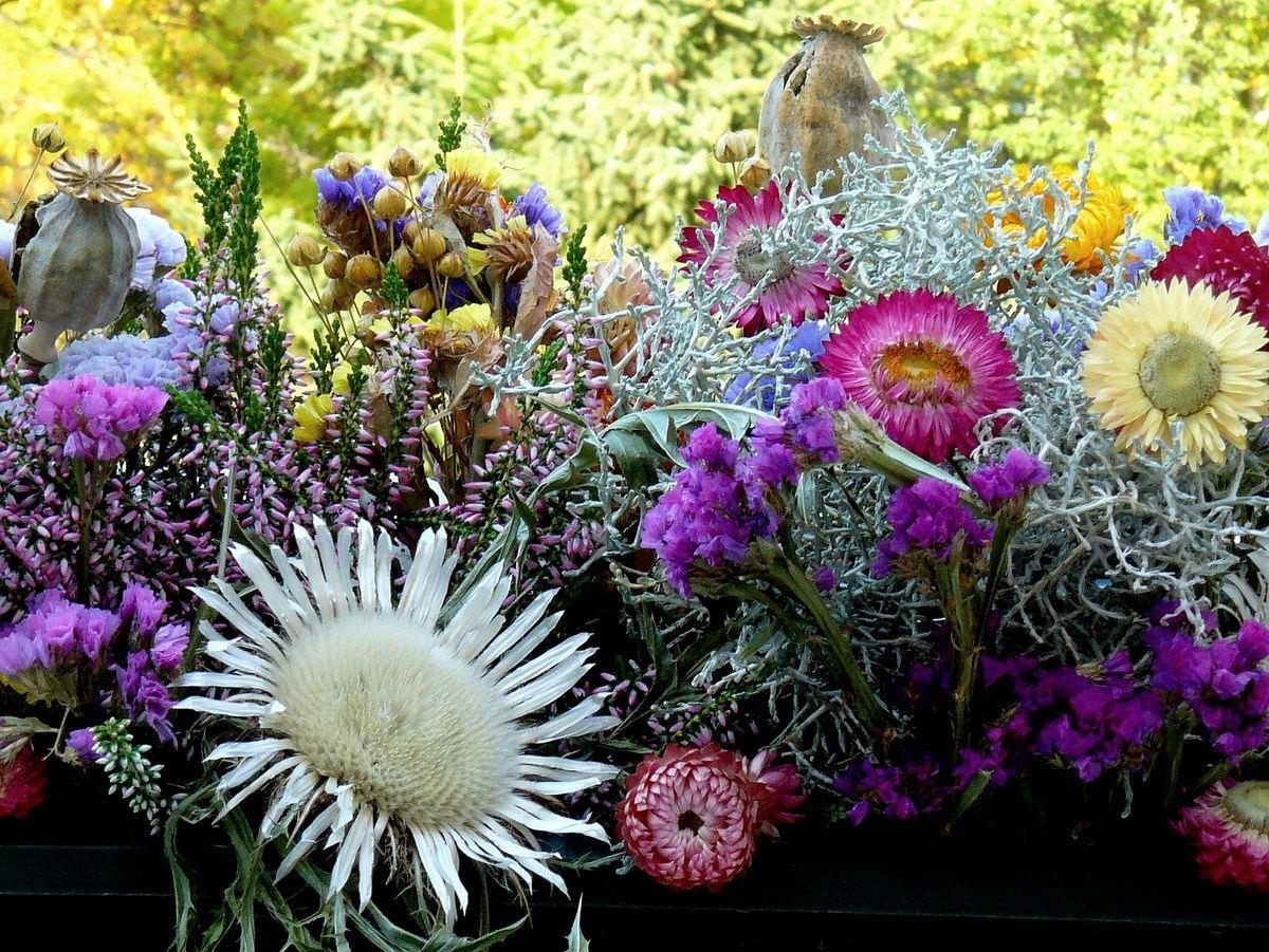 Цветы осенние. Автор фото: Йохан Метте