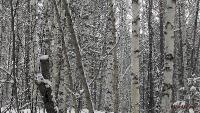 Жаровск. Март 2015. В ожидании весны