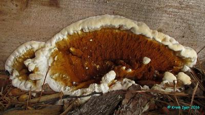 На хвойной доске старого дровяного сарая Автор фото: Кром Игорь