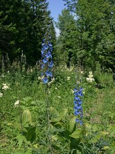 Снимок сделан 08.07.2007 года на хребте Проходной белок. Автор фото: Ольга Кузнецова