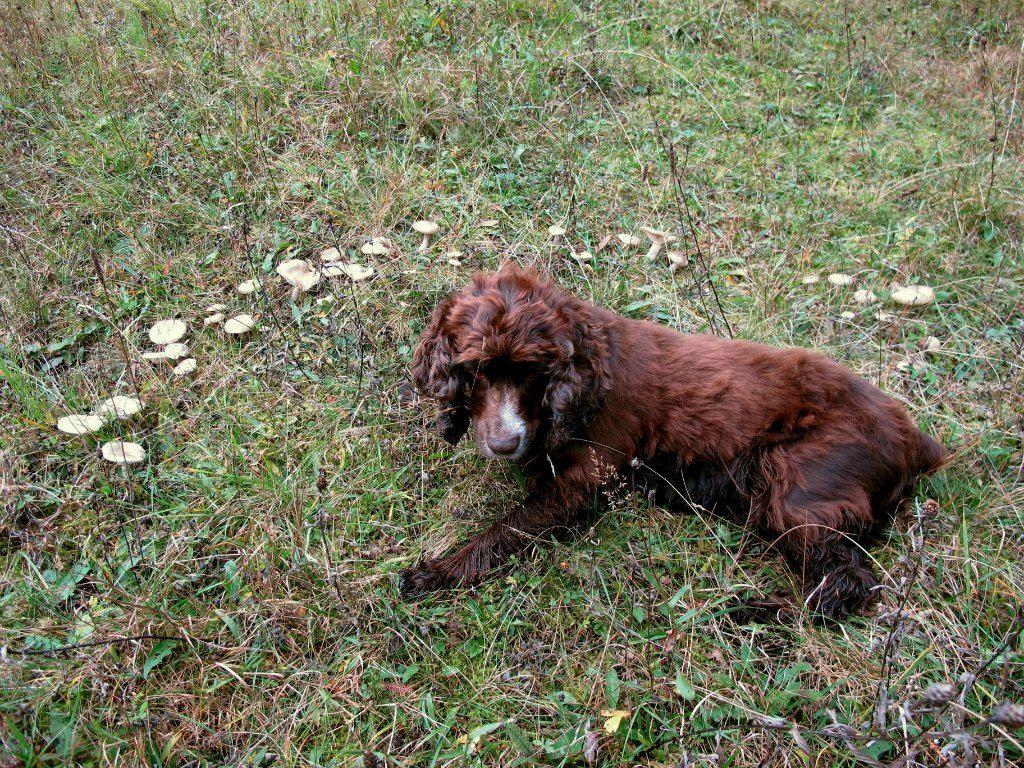 Мой верный пес Ник. Автор фото: Сергей Козлан