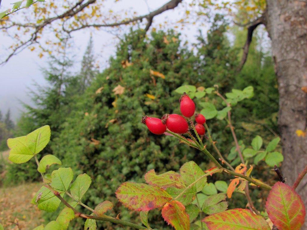 Осенние цветы Карпат. Автор фото: Сергей Козлан