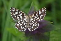 s:дневные бабочки,s:бабочки