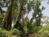 Сказочная природа NP Kakadu