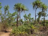 Растения NP Kakadu