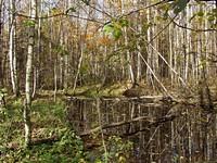 Октябрь. В лесу.