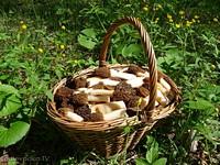 Сморчковые шапочки (Verpa bohemica)
