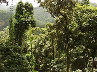 Дождевые леса Mamu
